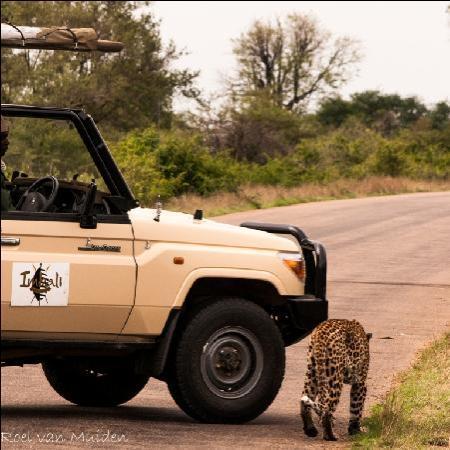 Imbali Safari Lodge: Leopard Sighting