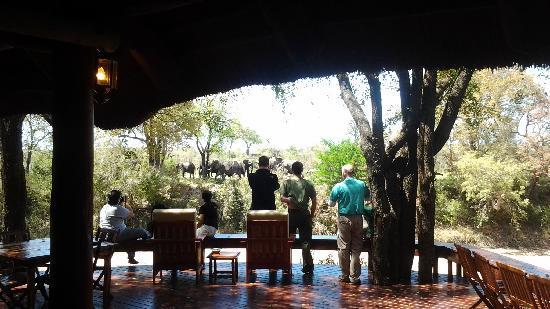 Imbali Safari Lodge: Guests enjoying Elephant