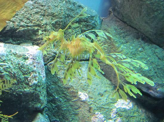 Wow Picture Of Monterey Bay Aquarium Monterey Tripadvisor