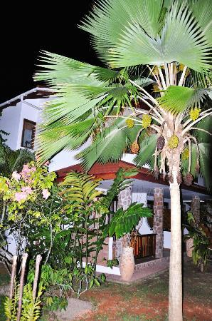Le Duc de Praslin: garden at night