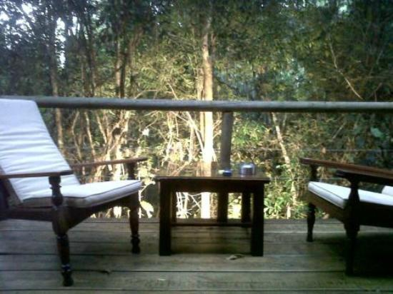 Trogon House and Forest Spa: View looking out