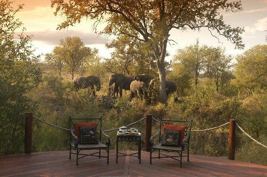 Hoyo-Hoyo Safari Lodge: Elephant at Hoyo Hoyo Tsonga Lodge