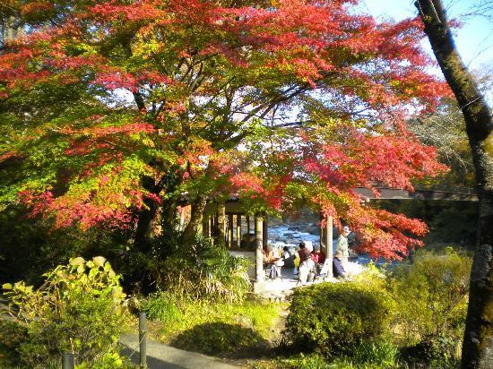 Mitake Valley: 澤乃井園上流