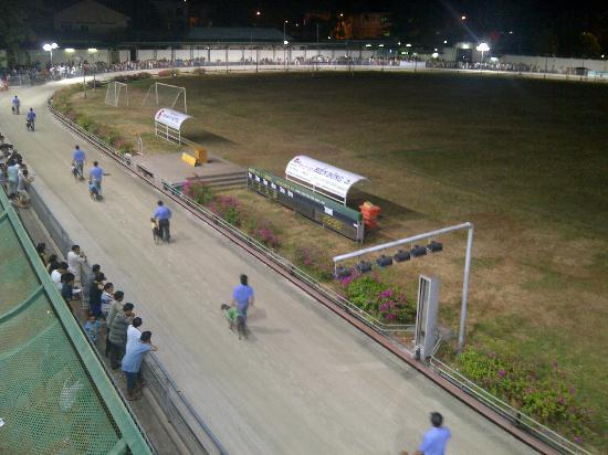 Lam Son Stadium: The greyhound parade before the race
