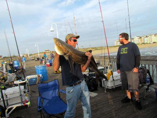 Big cobia are caught from time to time picture of for Pier 60 fishing