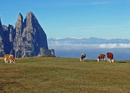 Residence Mayr: Alpe di Siusi