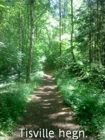 Tisvildeleje, Denmark: Skovsti