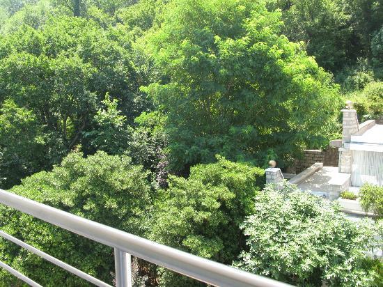Hotel Rivijera : Очень много зелени на территории отеля