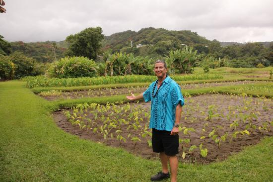 Open Eye Tours & Photos: Pono by a friends field of Taro, the Hawaiian staff of life.