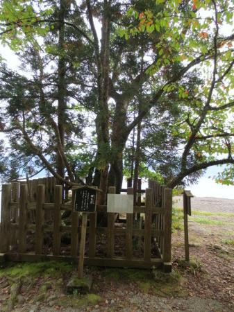 Gozanoishi Shrine : 七色木