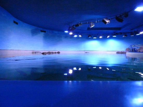 Sharjah Aquarium: inside 2