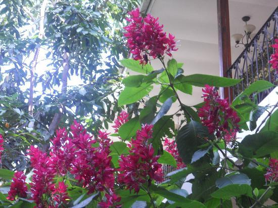 Managua Hills Bed and Breakfast: Flores en el jardin