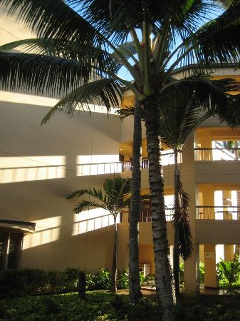 Courtyard Kaua'i at Coconut Beach: Large palm trees in open areas