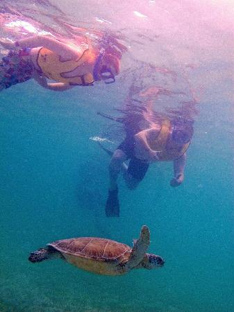 ClubHotel Riu Tequila: snorkeling