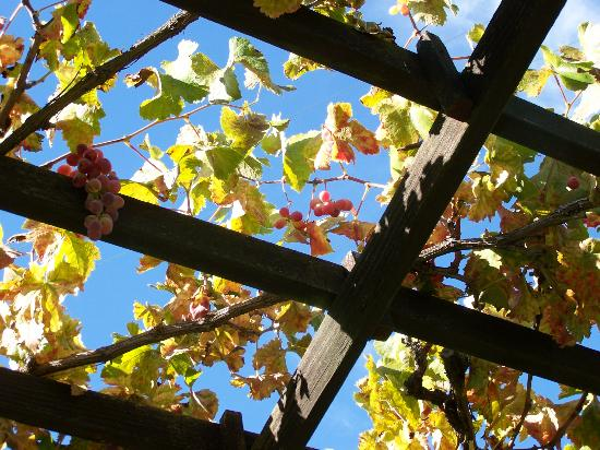 Napa Valley Wine Country Tours: Overhead at lunch