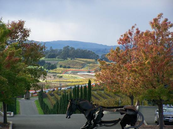 Napa Valley Wine Country Tours: Views from Madonna Estate