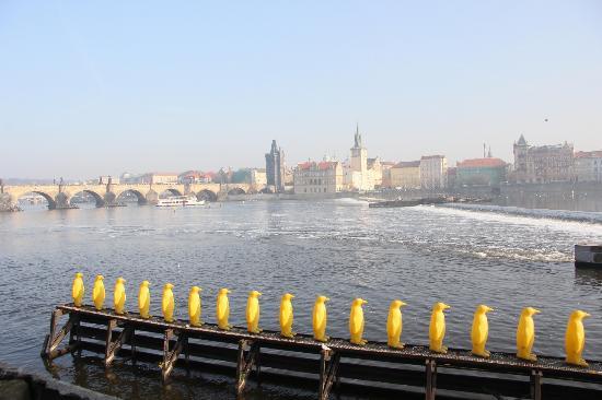 Prague Top Tour : Karlsbron från Kampa moderna museum