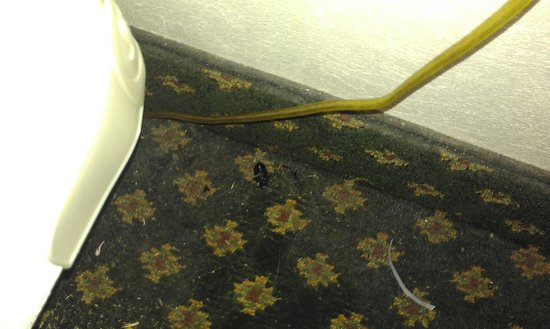 Red Roof Inn Wilmington: Huge, black bug on its back-side behind nightstand.