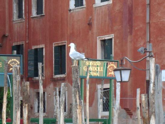 Venice 2000: Place to take the gondola