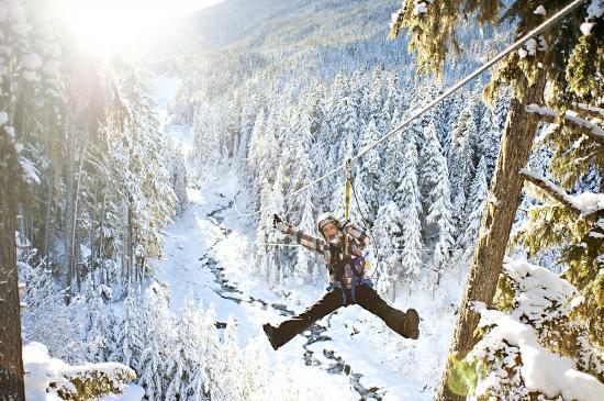 Ziptrek Ecotours: Ziptrek - Winter Launch!