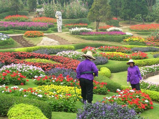 Mae Fah Luang Garden: Mae Fah Luang flower garden