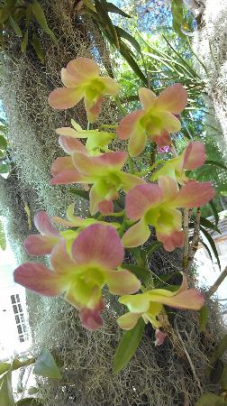 Marquesa Hotel: Orchids hanging from trees around pools