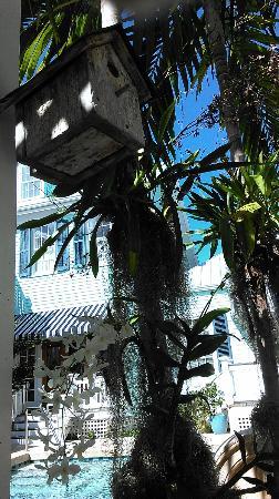 Marquesa Hotel: More flora