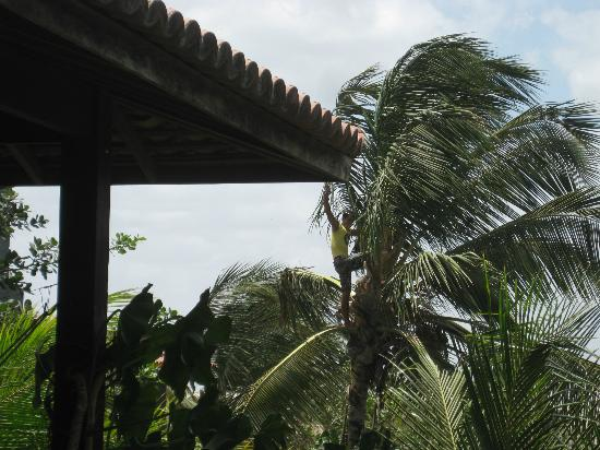 Pousada Vila Bela Vista: view from our room-see Francisco in the tree?