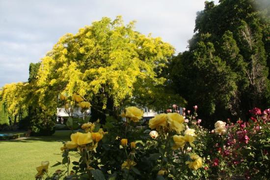 แมนกาปาปา เปทิทโฮเต็ล: the gardens at mangapapa
