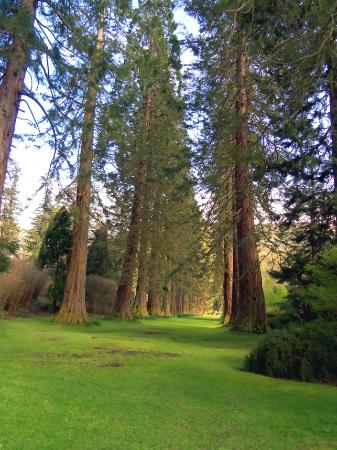 Benmore Botanic Garden: Redwood Alley - The Majestic Sequoias