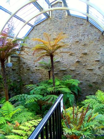 Benmore Botanic Garden: Inside the Fernery