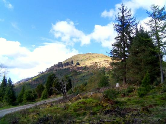 Benmore Botanic Garden: Atop the gardens at the high point