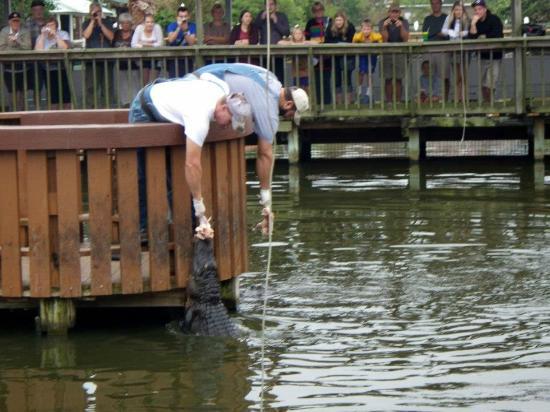 Gatorland: gator feeding