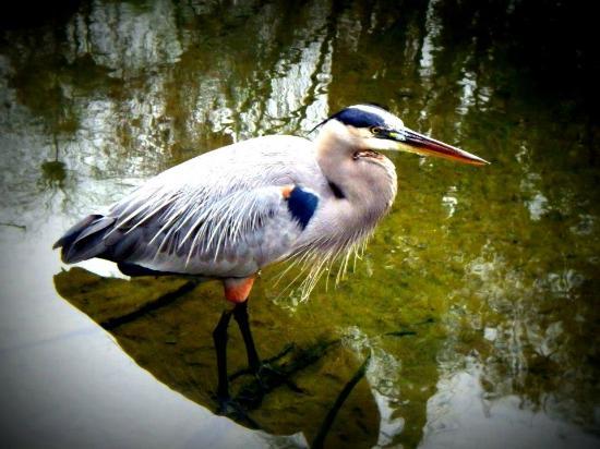Gatorland: bird