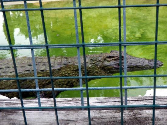 Gatorland: croc