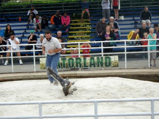 Gatorland: gator wrastlin'