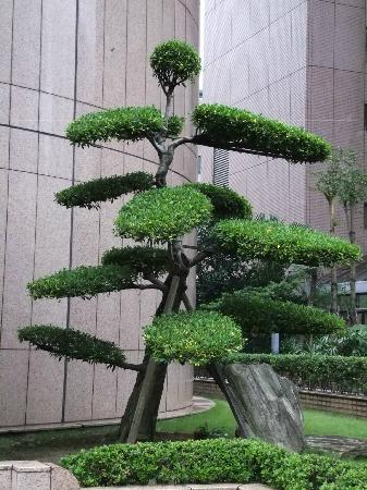 The Sherwood Taipei : outside topiary