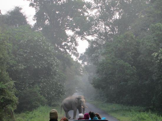 Gorumara National Park, อินเดีย: efe