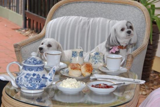 Must Love Dogs B&B & self contained cottage: guests enjoying devonshire tea