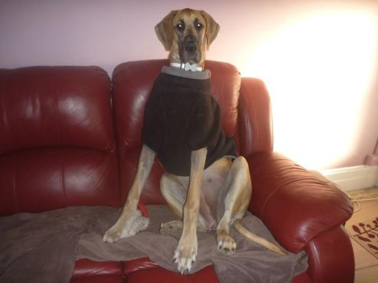 Must Love Dogs B&B & self contained cottage: resident top dog,princess in her winter pajamas