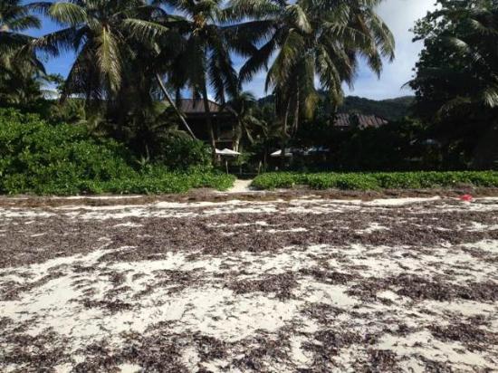 Dhevatara Beach Hotel: Hotelstrand