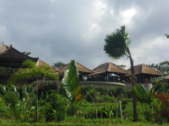 Samanvaya: L'hôtel vu des rizières