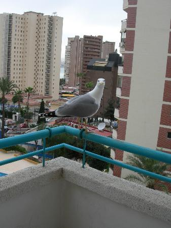 Las Torres Apartments: a friend came to visit