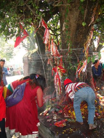 Bindhya Basini Temple: Pipal Tree