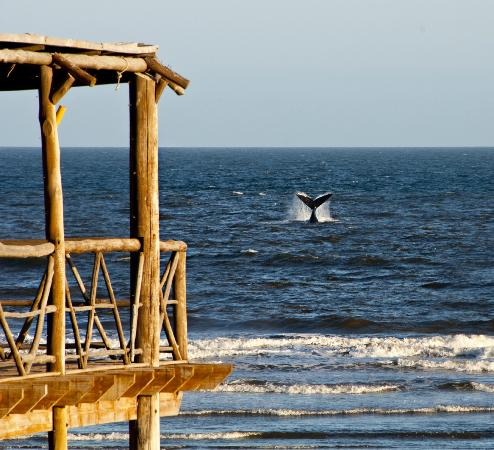 Claromeco, Argentina: September , October and November, you can sea whales making acrobacies, in their way to the nort