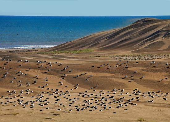Claromeco, Аргентина: More dunes seagulls and sea . You can get lost in these deserted ,rough and natural beaches