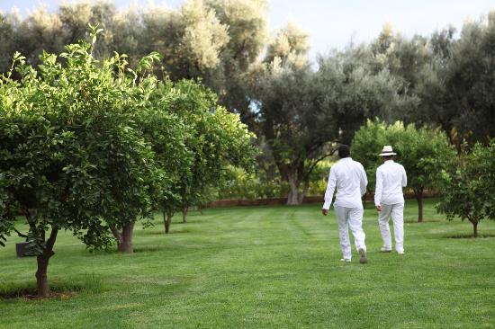 La Mamounia Marrakech: Impecables trabajadores, van a buscar naranjas de los jardines