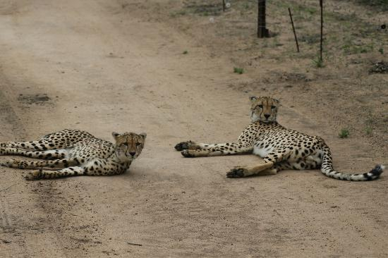 Chapungu Luxury Tented Camp: Brother and sister in harmony
