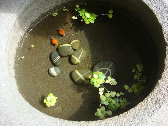 Echo villa: cute little fish at entrance