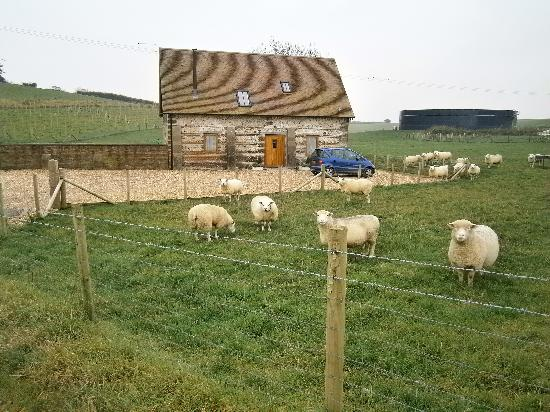 Winterborne Whitechurch, UK: Lovely rural location on a working farm